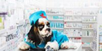 Ветеринарные аптеки и зоомагазины