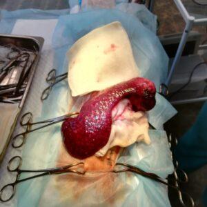 Клинический случай Мэни фото 5