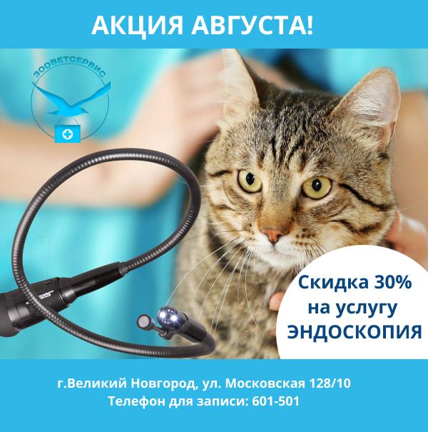 Эндоскопия животных